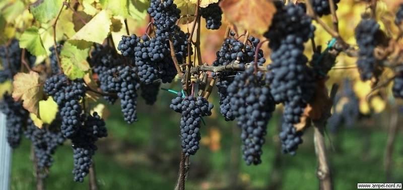 Рейтинг красных сухих вин: какую лучше марку выбрать и как это сделать