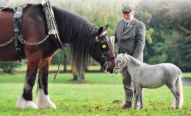 Самая большая лошадь в мире: интересные факты