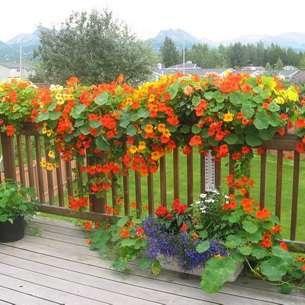 5 красивых лиан для тенистого сада