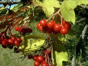 Подборка лучших средств для обработки плодовых деревьев