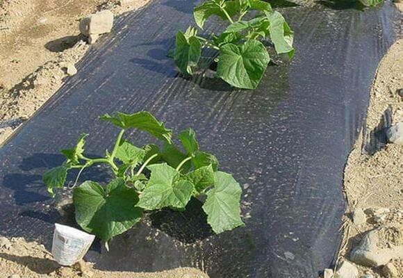 Укрывной материал для огурцов: отличия спанбонда от агроволокна