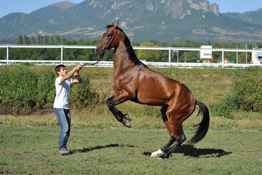 Как обучить лошадь верховой езде