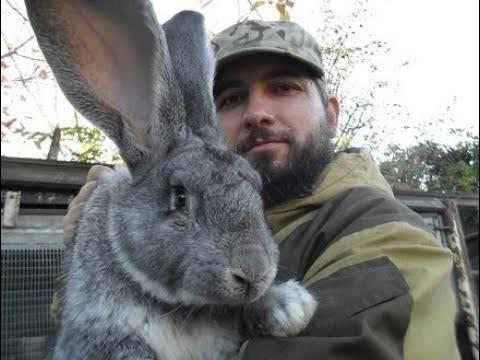 Почему кролик грызет клетку и опасно ли это