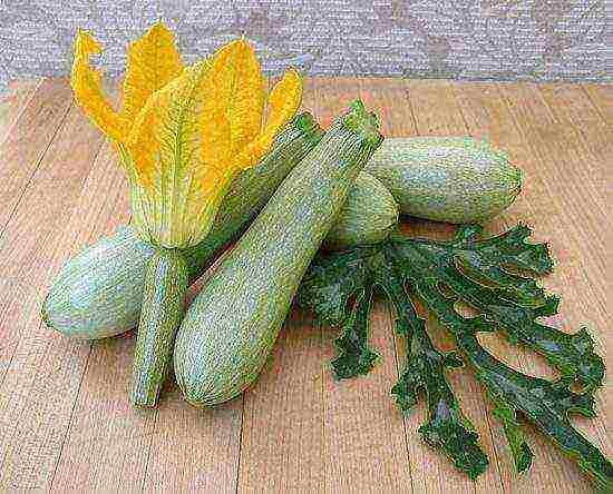 Как замачивать семена кабачков перед посадкой