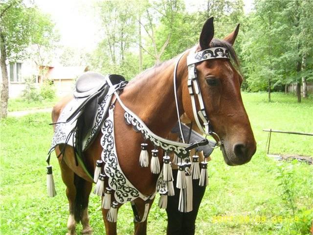 Как сесть на лошадь и как слезать.