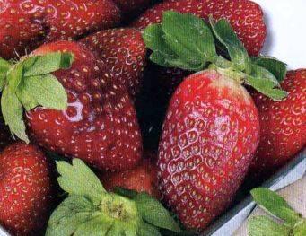О сортах клубники: описание самых лучших, сладких, высокоурожайных