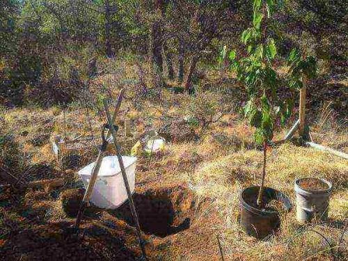 Посадка яблони: как правильно посадить саженец осенью и весной (фото, видео)