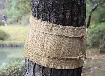 Инструкция по самостоятельному приготовлению ловчих поясов для плодовых деревьев
