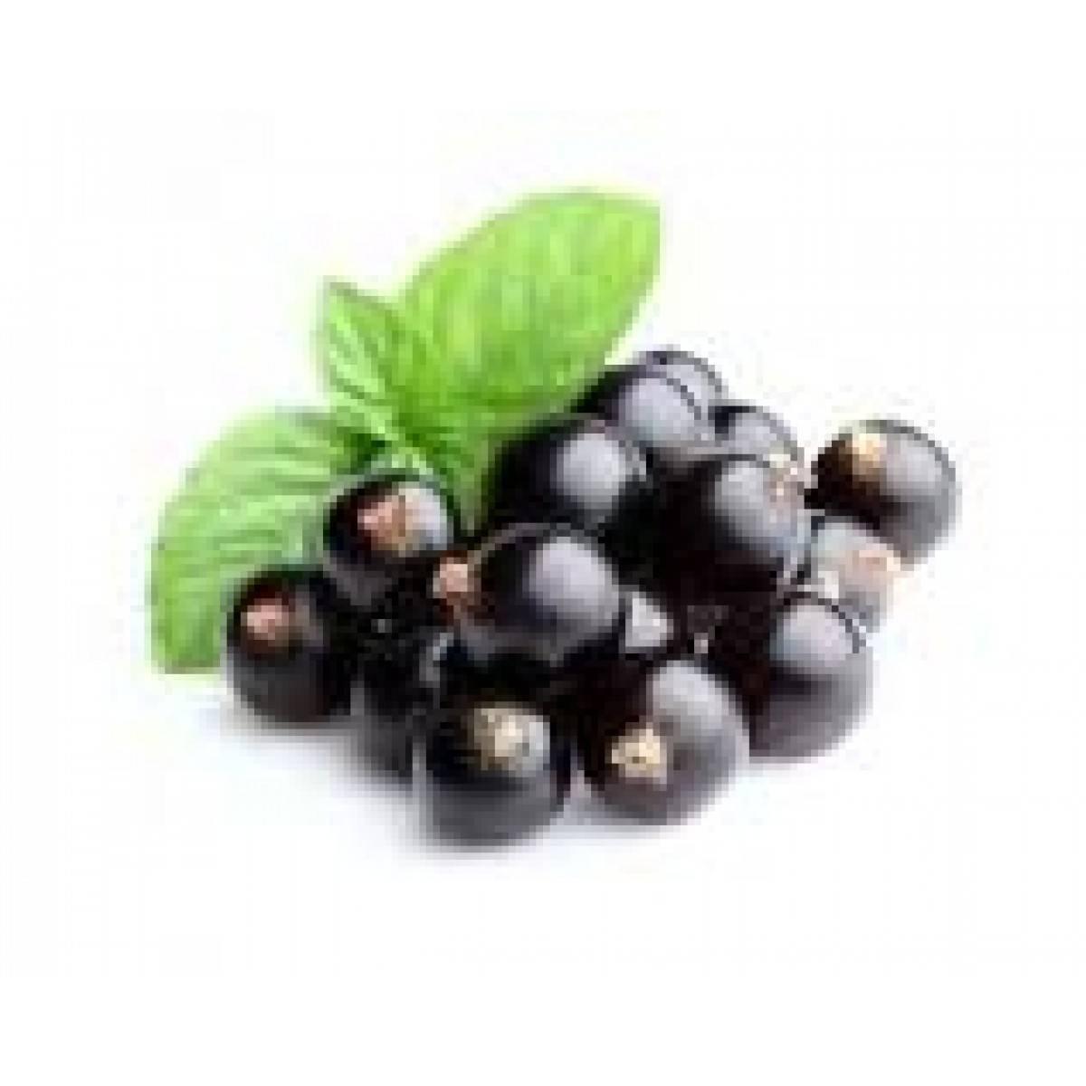 Черная смородина, полезные свойства и противопоказания