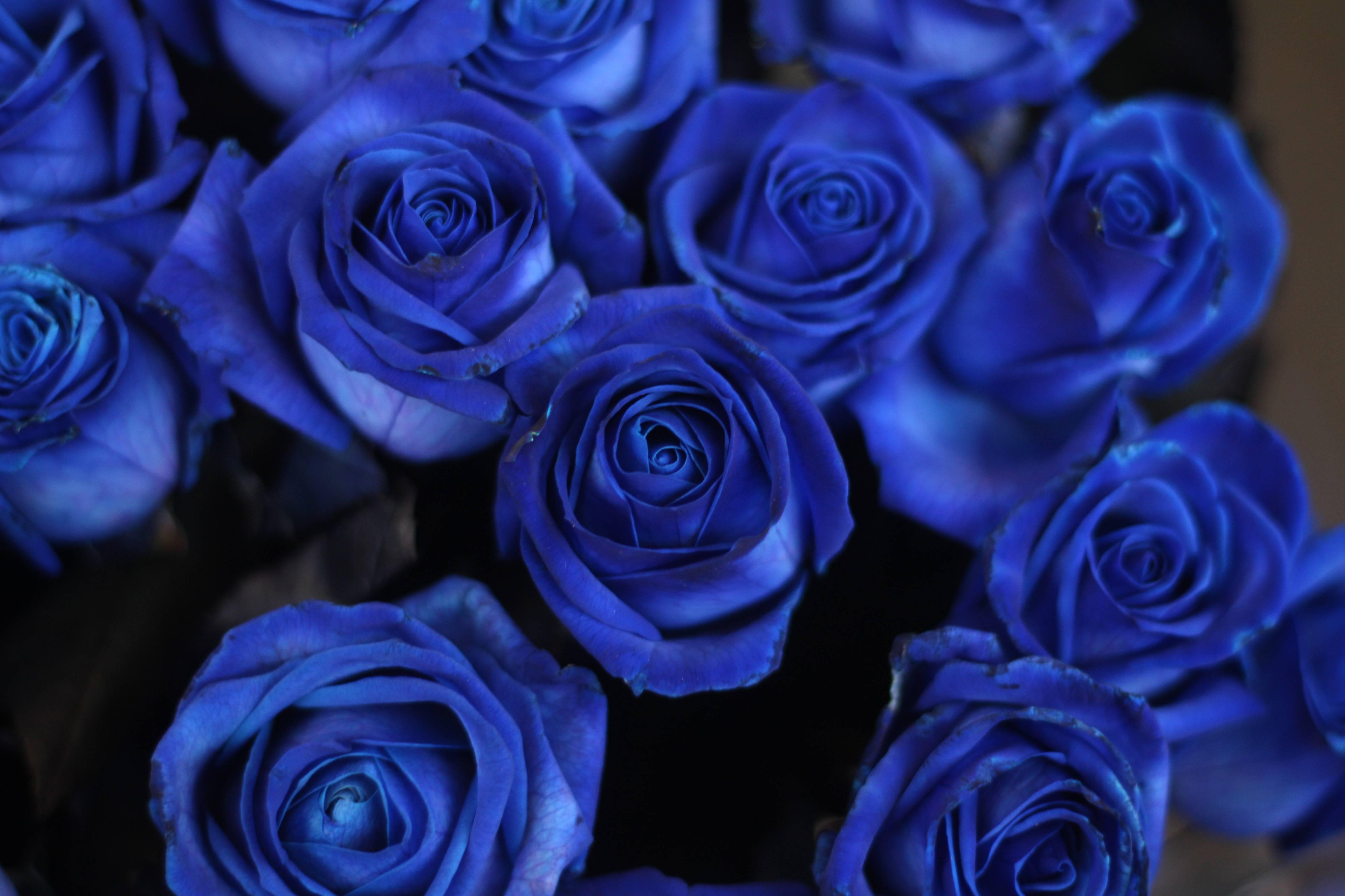 Бывают ли синие розы
