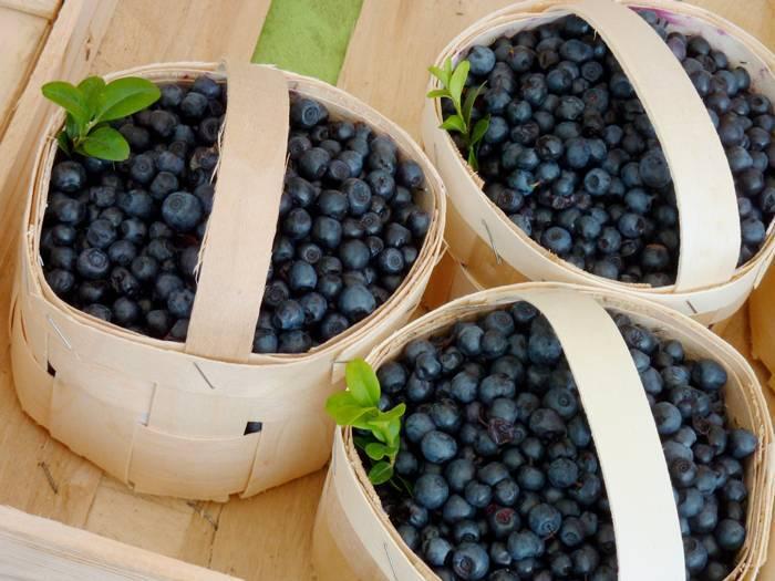 Выращивание голубики семенами, черенками, отводками, полив, подкормка, обрезка