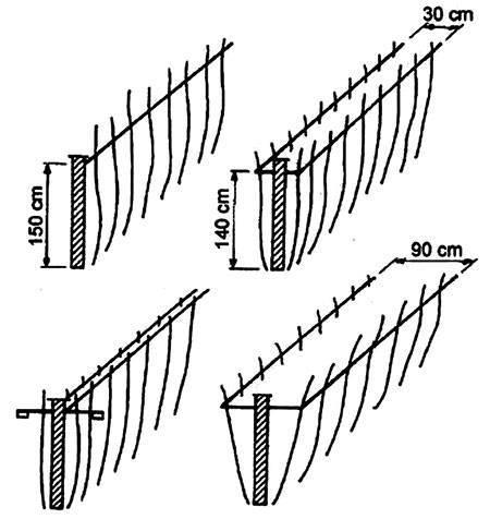 Инструкция как сделать шпалеру для малины своими руками