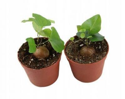 Ребенок хочет посадить огород? выращивайте бобы. как сделать огород для ребенка