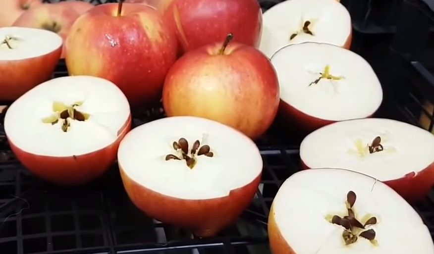 Как вырастить яблоню из семечка – рассуждения об антоновке