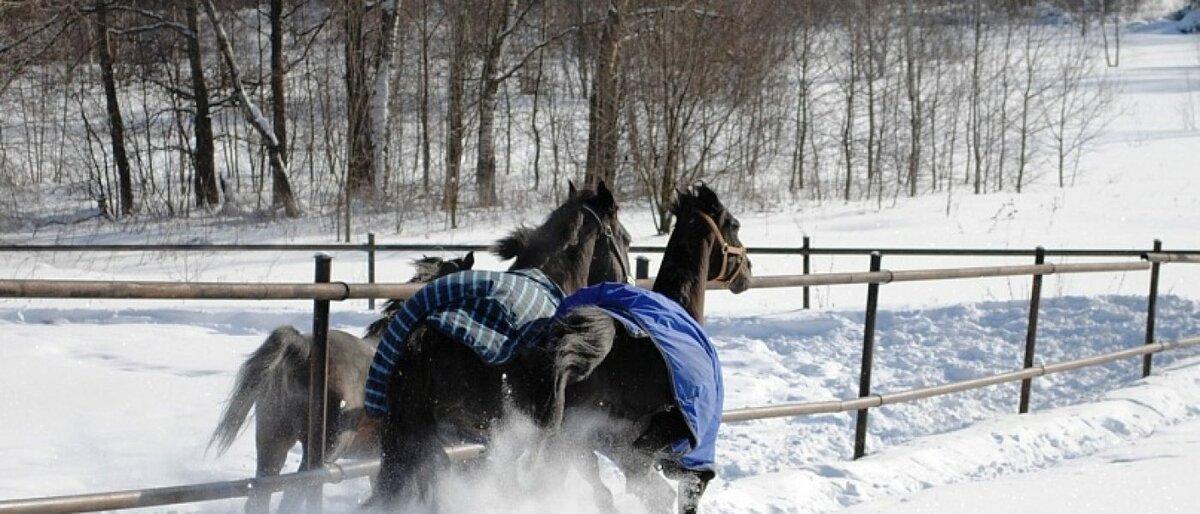 Сколько обходится содержание лошади