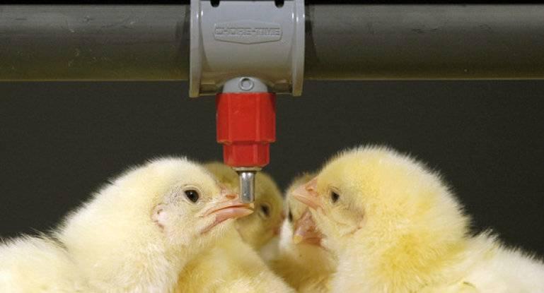 Давайте сделаем кормушку цыплятам