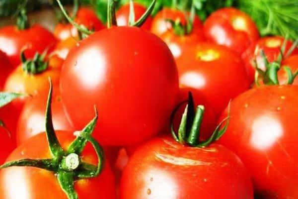 Томат буян: отзывы, фото, урожайность, описание и характеристика   tomatland.ru