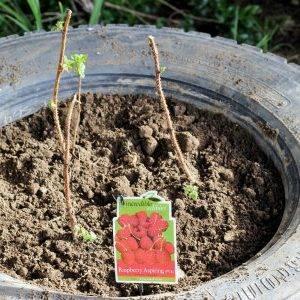 Высадка рассады огурцов в открытый грунт: пошаговая инструкция