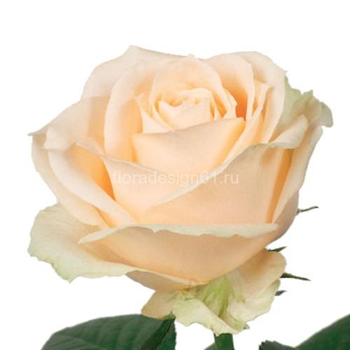 Все о посадке и уходе за сортом роз «пич аваланж»