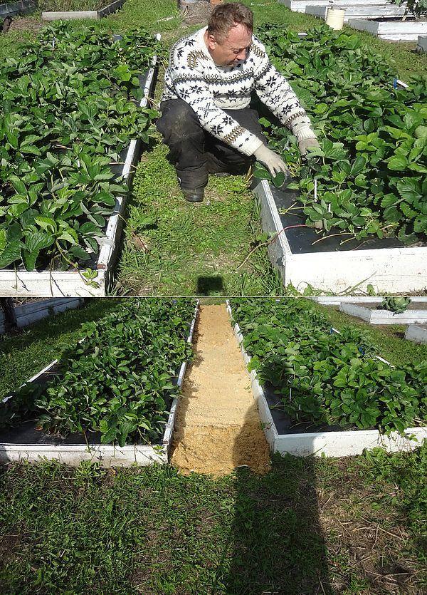 Скошенная трава: куда девать, как использовать на даче