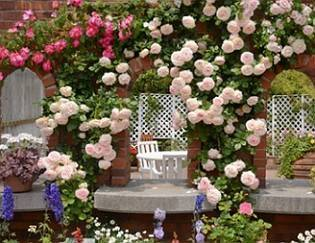 Кустовые розы: как вырастить, посадка и уход, фото, размножение и обрезка