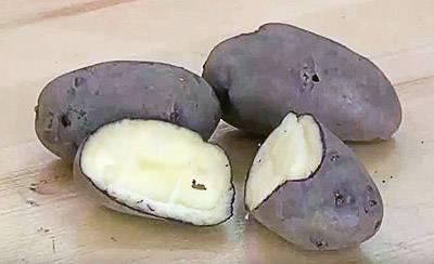 Мондео: описание семенного сорта картофеля, характеристики, агротехника