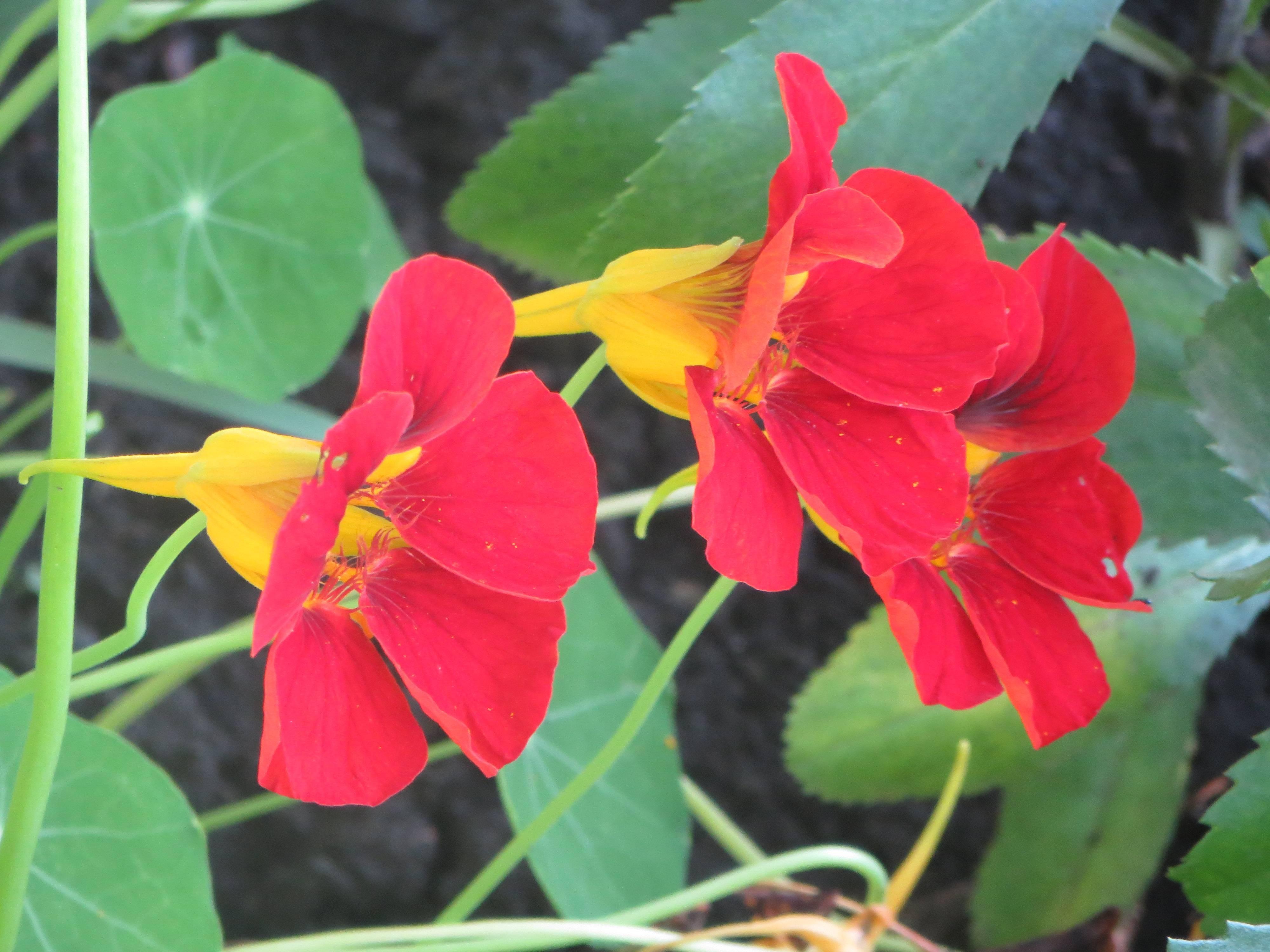 Лучшие травянистые лекарственные растения