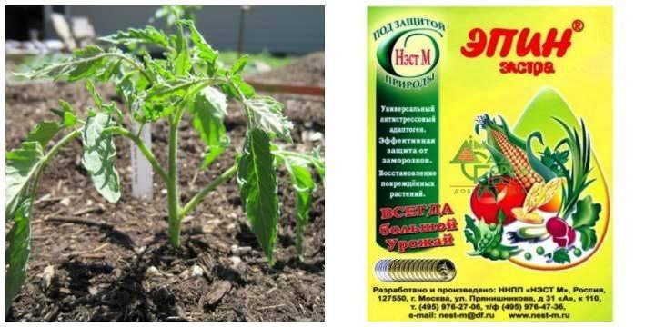 Эпин: инструкция по применению для рассады томатов