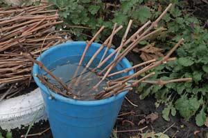 Пошаговый процесс посадки винограда весной и осенью + мастер-классы