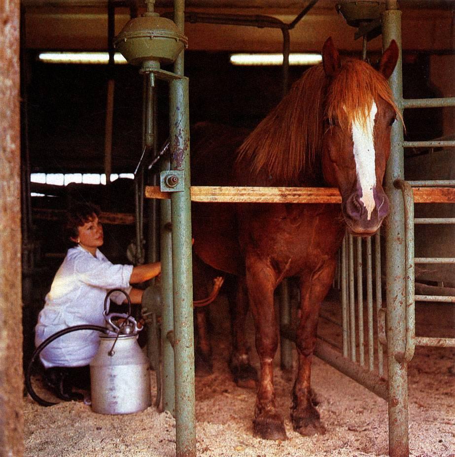 Налить лошади молоко