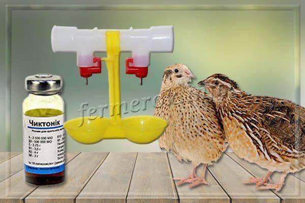Гамматоник для цыплят