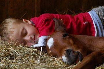 Правда ли, что лошади спят стоя?