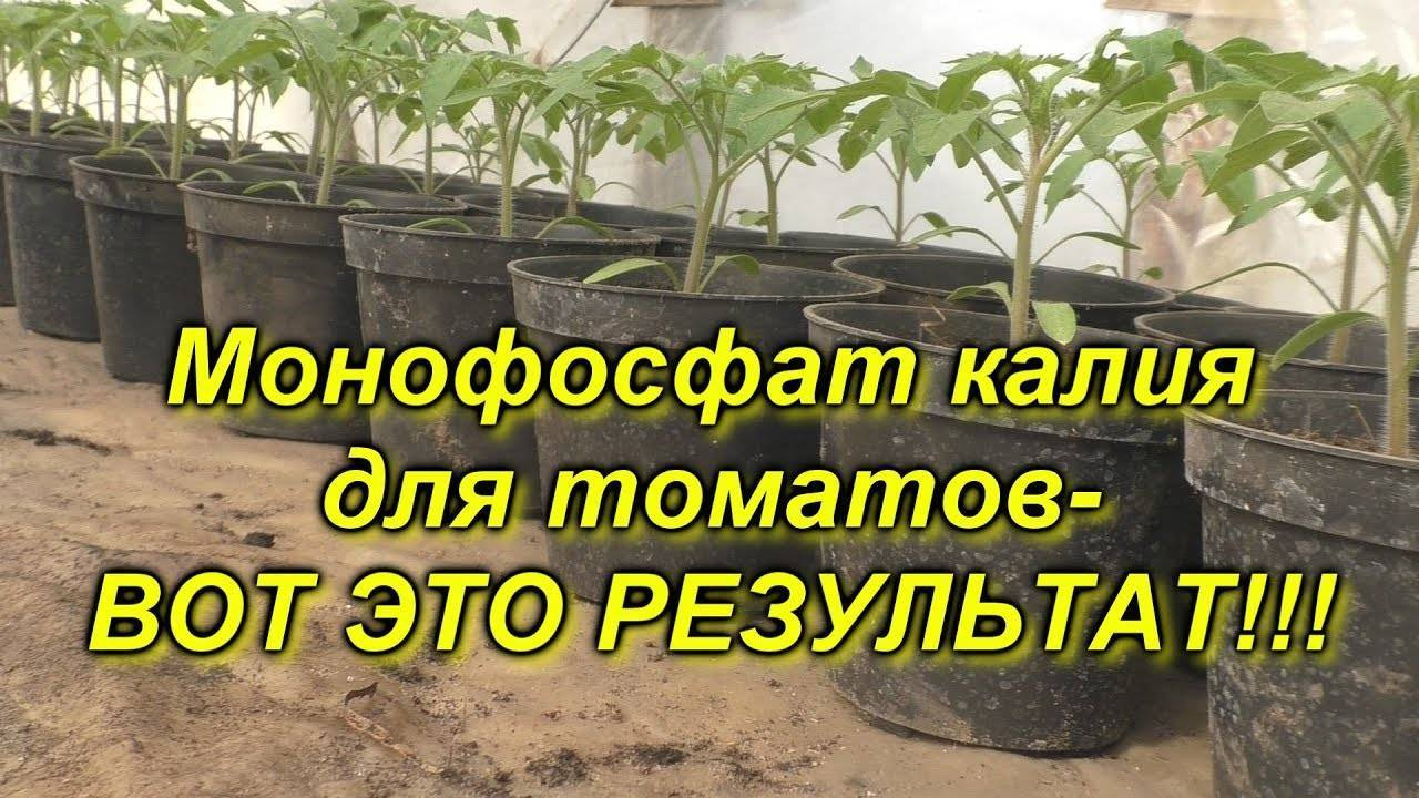 Сульфат калия для томатов: удобрение и применение, как подкормить помидоры