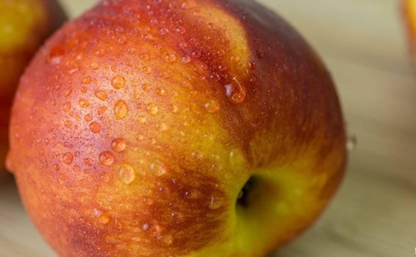 Нектарин яблочный: описание сорта и 4 этапа ухода