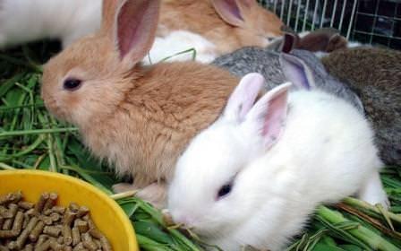 Комбикорм для кроликов: состав и нормы потребления