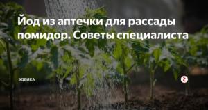 Йод для рассады томатов: как использовать подкормку, как поливать рассаду