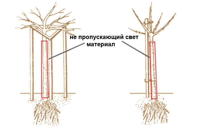 Выращивание и правильный уход за смородиной. секреты выращивания черной смородины: от посадки до ухода как вырастить чёрную смородину. пошаговая инструкция