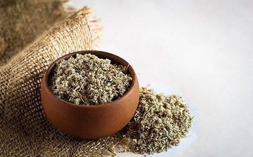 Лечебные и вредные свойства травы эрвы шерстистой