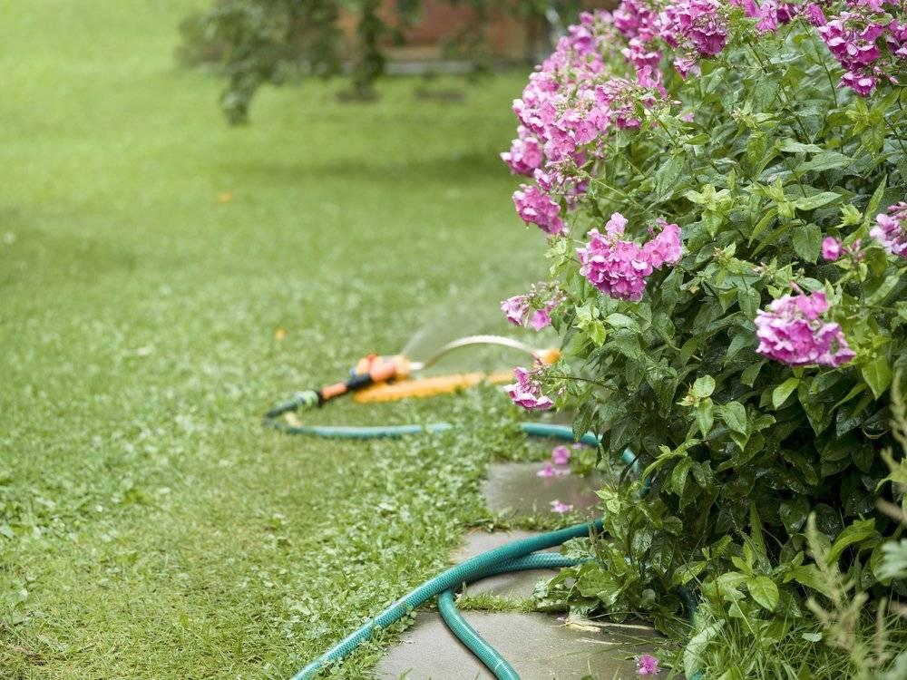 Что любят флоксы: почва, подкормка, уход, чем удобрять?