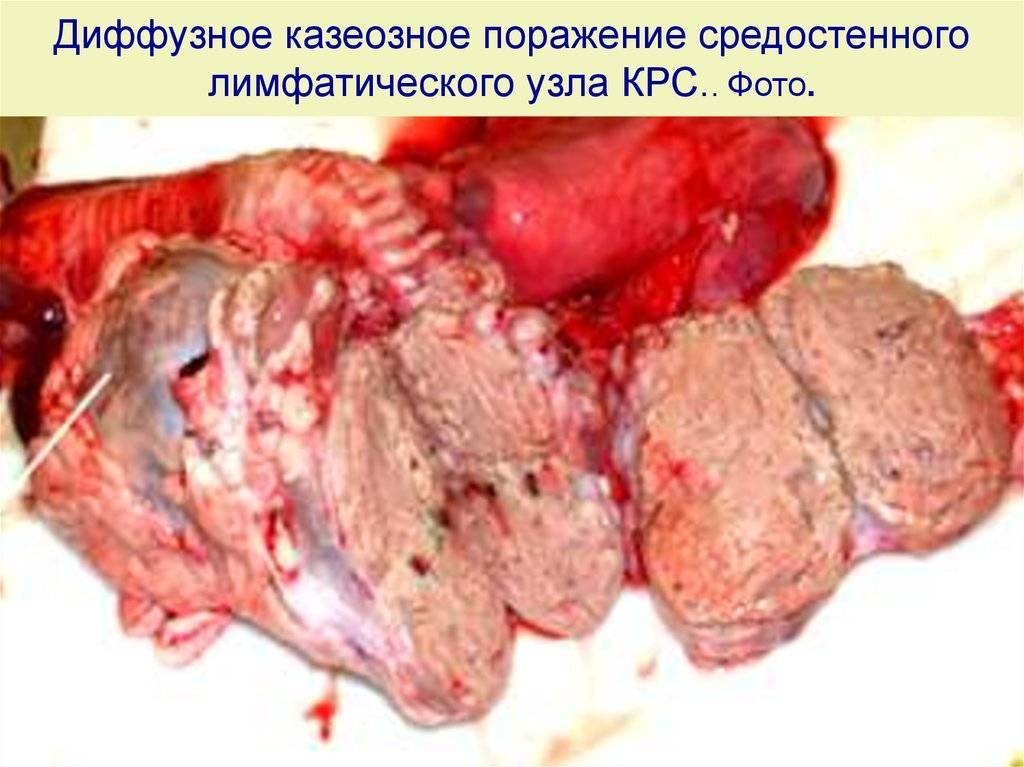 Болезни печени у крупного рогатого скота