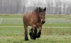 Сонник лошади плавают. к чему снится лошади плавают видеть во сне - сонник дома солнца
