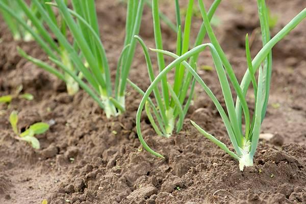 Благоприятные дни для посадки в мае 2020 - шпаргалка для огородника!   красивый дом и сад