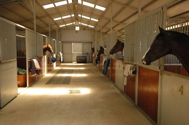 Своя лошадь:где держать и чем кормить - нехитрые советы - конный мир
