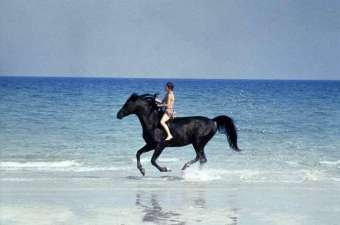 Породы верховых лошадей: обзор и характеристики