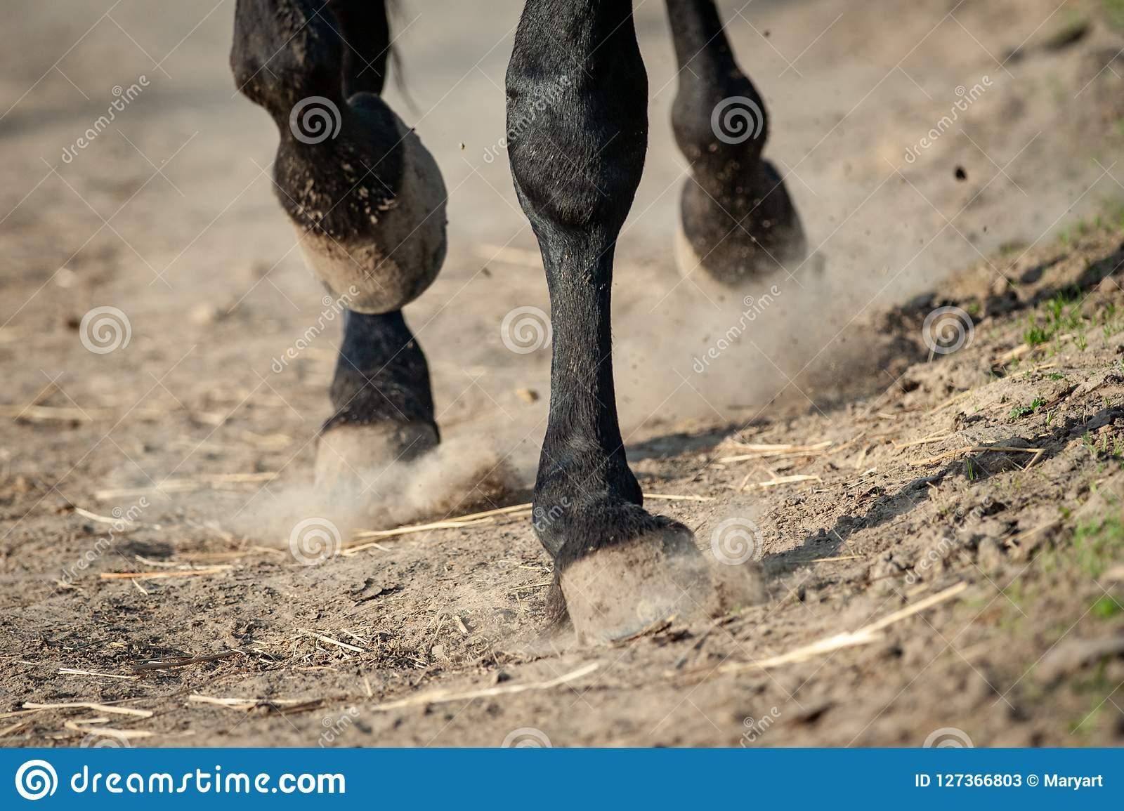 Сонник копыта лошади. к чему снится копыта лошади видеть во сне - сонник дома солнца