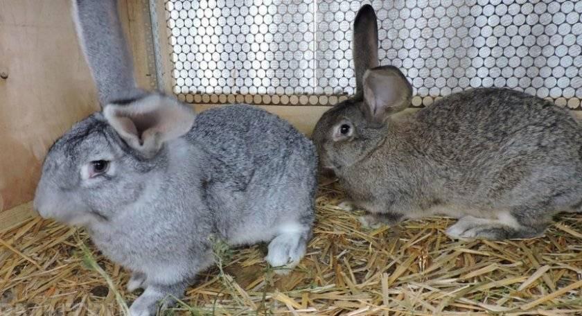 Как развести кроликов? кролики: разведение, выращивание, кормление