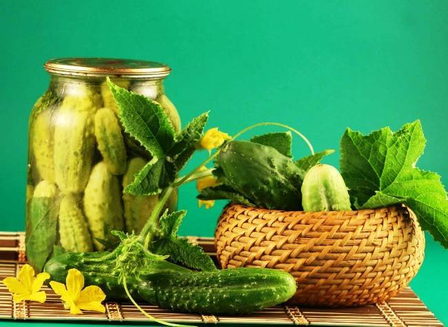 Семена огурцов: лучшие сорта для теплиц