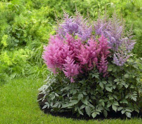 Когда сажать семена и рассаду цветов в открытый грунт?