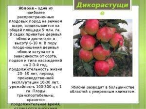 На какой год плодоносит вишня, после посадки саженца, сколько раз в жизни