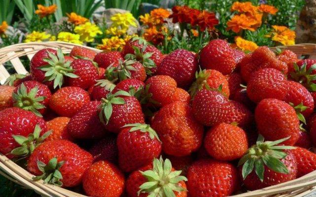 Выращивание клубники на дачном участке: разнообразие способов и советы по уходу